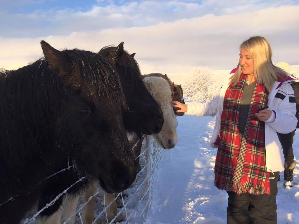 Icelandic Horses Traveler Tourist Winter Snow Iceland